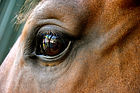 reflection personal or bussiness coaching withreflection  horses dogs cows nature