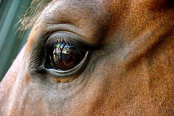 paarden coaching of management  en leaderships traingingen of kiest u voor mindsonar denkstijlen met  koeien en honden wolven en paarden