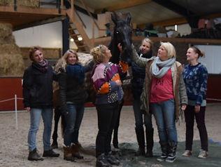 in en outdoortraining en coaching met honden of management  en leaderships traingingen of kiest u voor mindsonar denkstijlen met  koeien en honden wolven en paarden