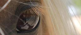 reflectie spiegelen in en outdoortraining en coaching met honden of management  en leaderships traingingen of kiest u voor mindsonar denkstijlen met  koeien en honden wolven en paarden