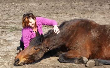 coaching met paarden innerlijk contact