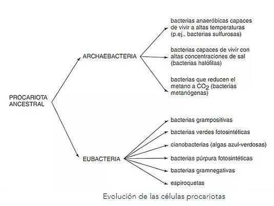 procariota.jpg