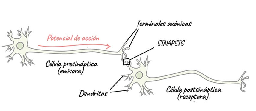 SINP2.jpg
