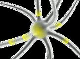 neuron-160944_1280.webp