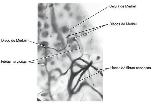 fig23.jpg