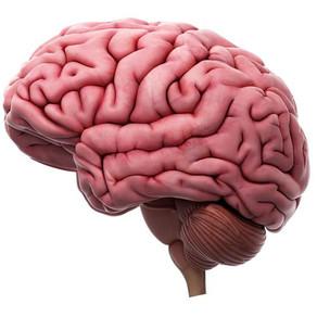 La Neurociencia