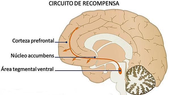 sistema-recompensa-cerebro-s.jpg
