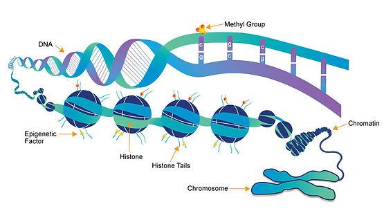 dna-chromatin-histone.jpg