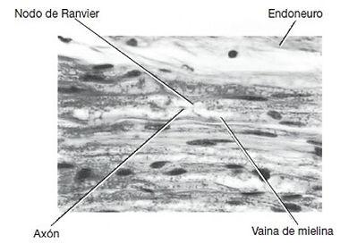 fig 10.jpg