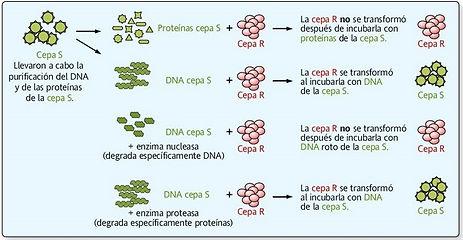 Figura 8.jpg