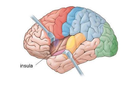 insula-cerebro.jpg