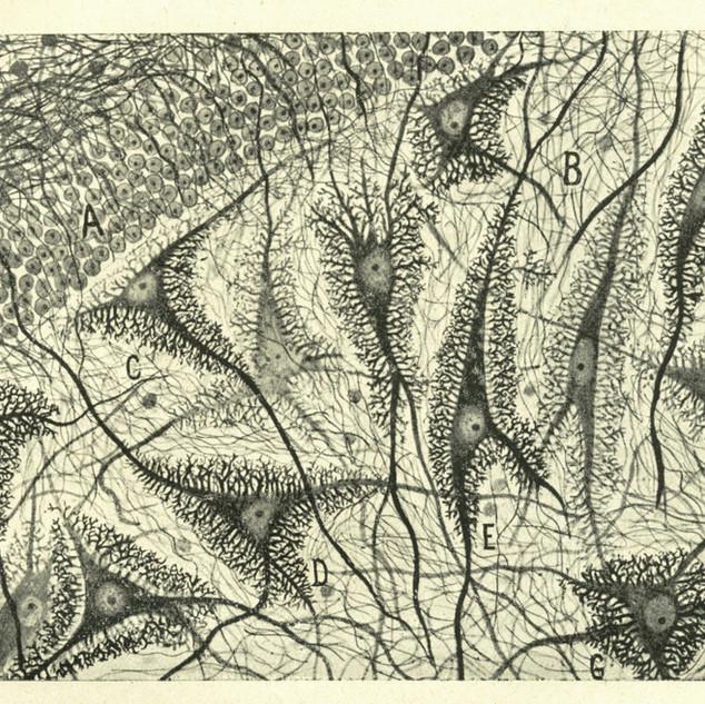 Santiago_Ramon_y_Cajal_Minneapolis.jpg