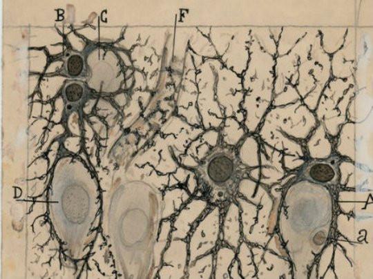 Los-dibujos-de-Cajal-de-gira-por-Norteam