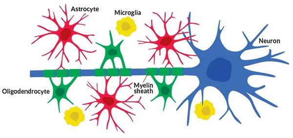 microglia.jpg