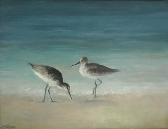 Morning with the Sandpipers