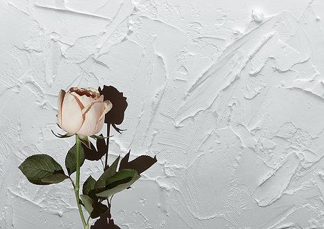 Textured Rose 2