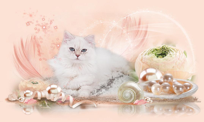 BLH-Cattery Lucellum