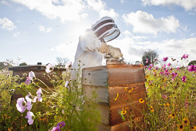 Miel: 15 bienfaits et vertus du miel (et ses risques!)