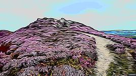 Conwy Mountain, Snowdonia Autumne Purple Heather