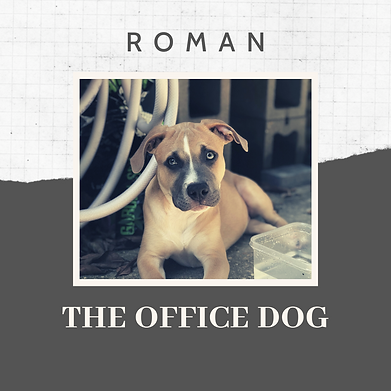 ROMAN THE OFFICE DOG-2.png