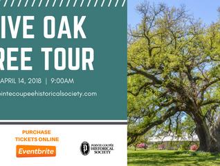 Live Oak Tree Tour