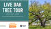 Live Oak Tree Tour