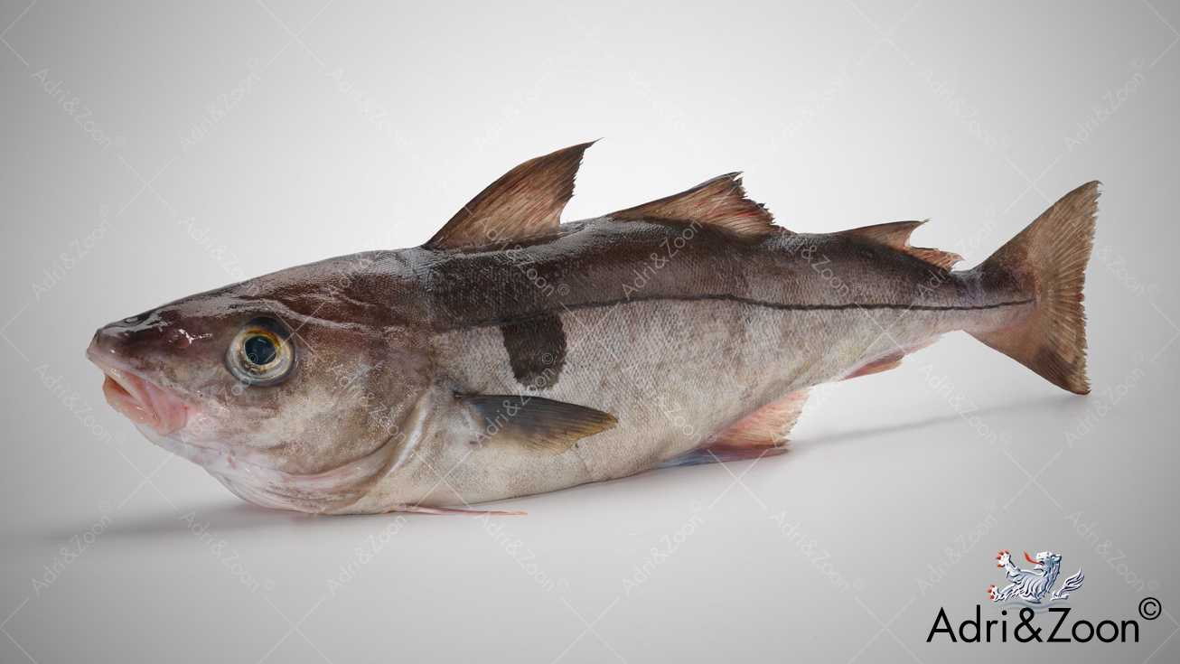 aiglefin