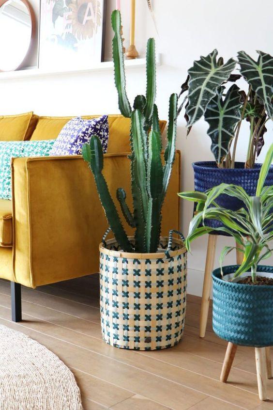 Olohuoneen nurkkaukseen on sijoitettu keltaisen samettisohvan viereen kolme viherkasvia. Kasvit on eri korkuisissa ruukuissa. Kaksi pienempää kasvit on jalallississa ruukuissa jotta saavat lisää korkeutta.