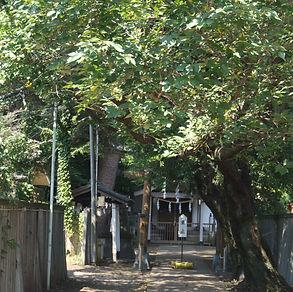 尾崎熊野神社  Ozaki-Kumano Jinja