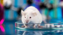 Estudo revela truques da indústria farmacêutica para manipular resultados