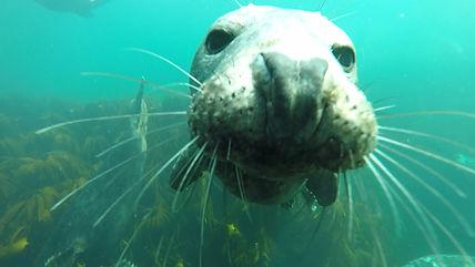seal head2.jpg