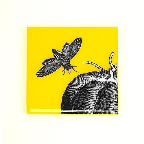 Yellow Moth Coasters