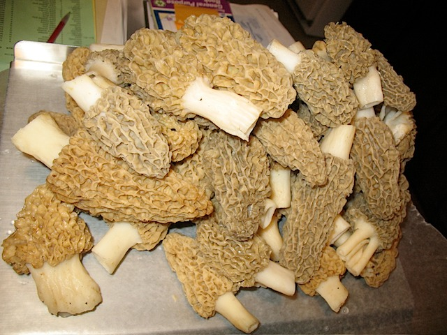 Morel mushrooms at Tamarack Farm