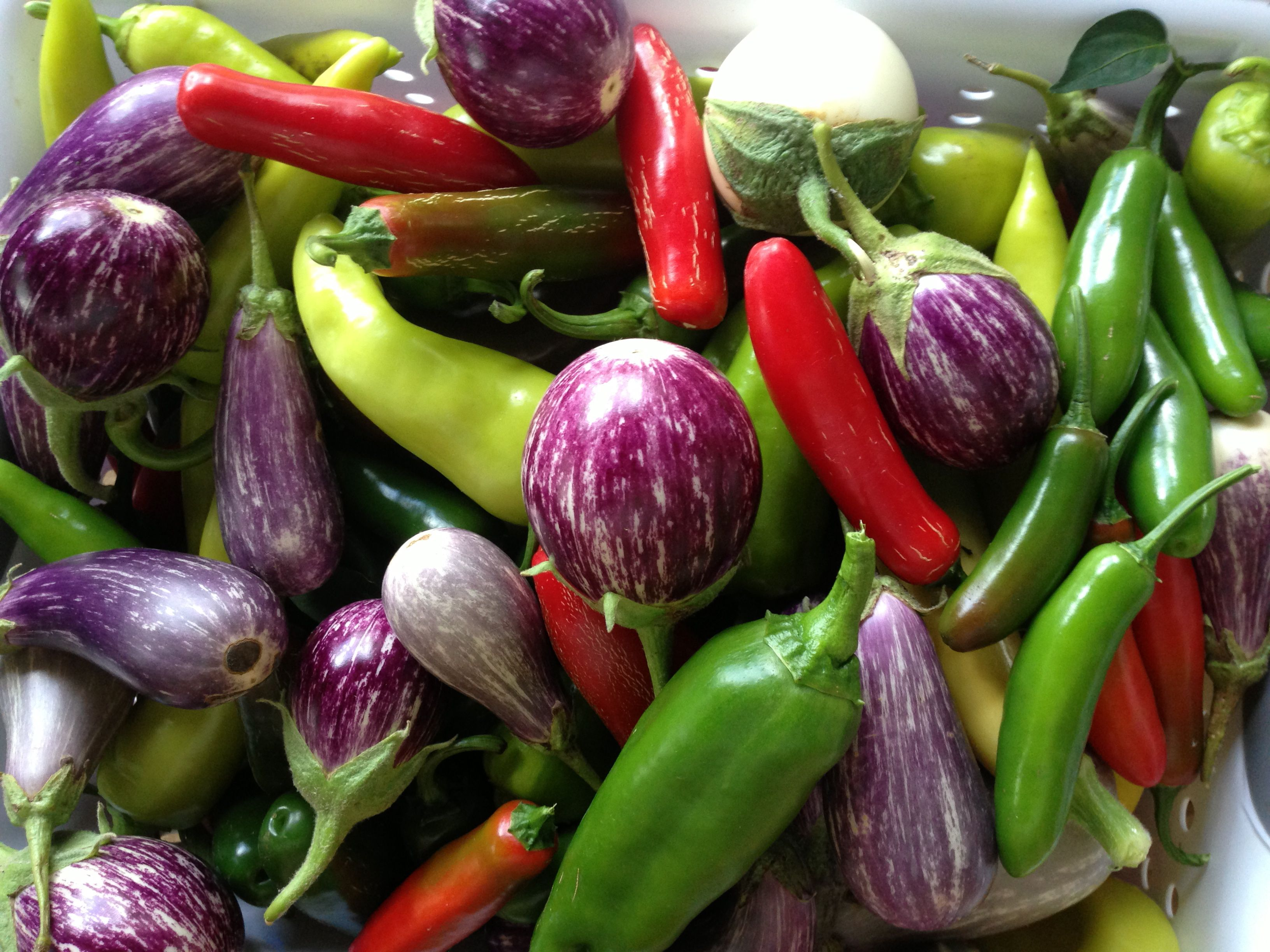 Peppers and Eggplant - Tamarack Farm