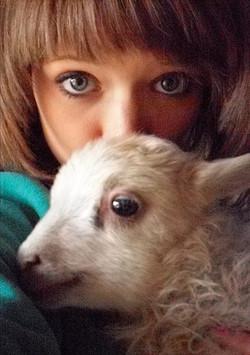 Tamarack Farm Sheep & Wool - Lambs