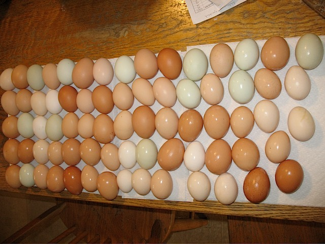 Multi-colored eggs at Tamarack Farm