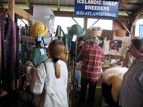 Icelandic Sheep for sale in Pennsylvania