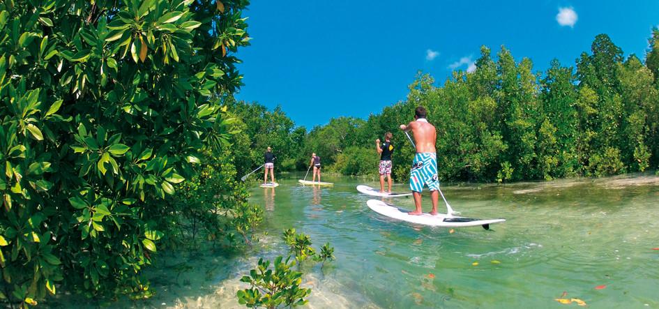 Mangrove SUP Tour