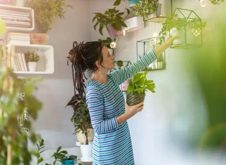 Plantas permanentes: sem manutenção e sempre verdes!