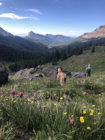 Colorado Wildflower Hike