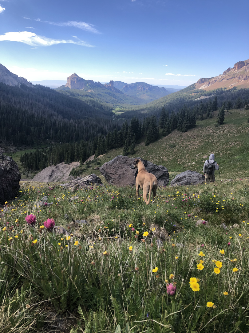 Colorado Wildflower Hike