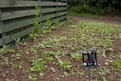 Seeds germinating 15 June