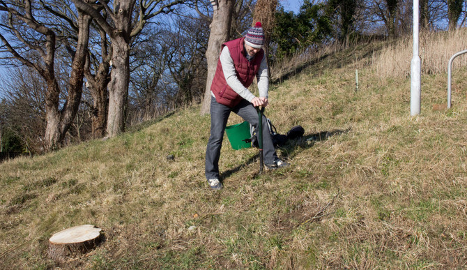 Tree Planting on the Wild Flower Bank