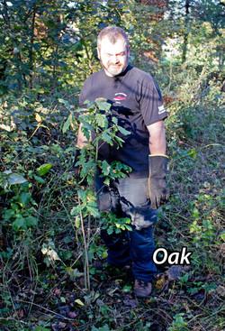 Oak-1txt