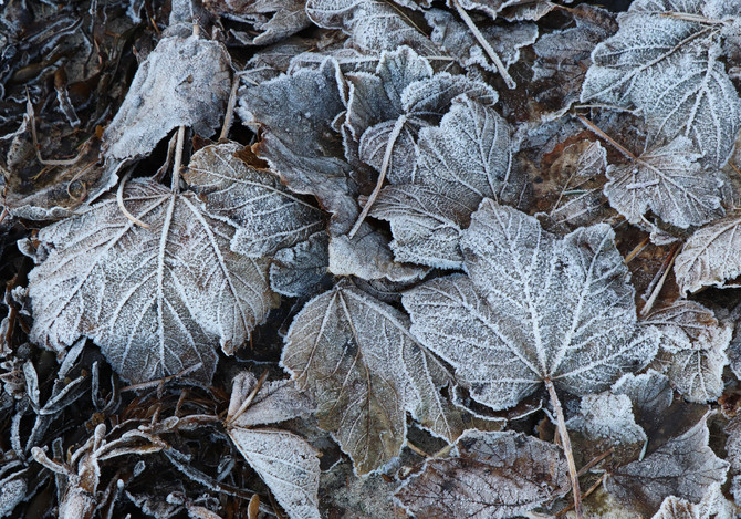 Patterns in Frost