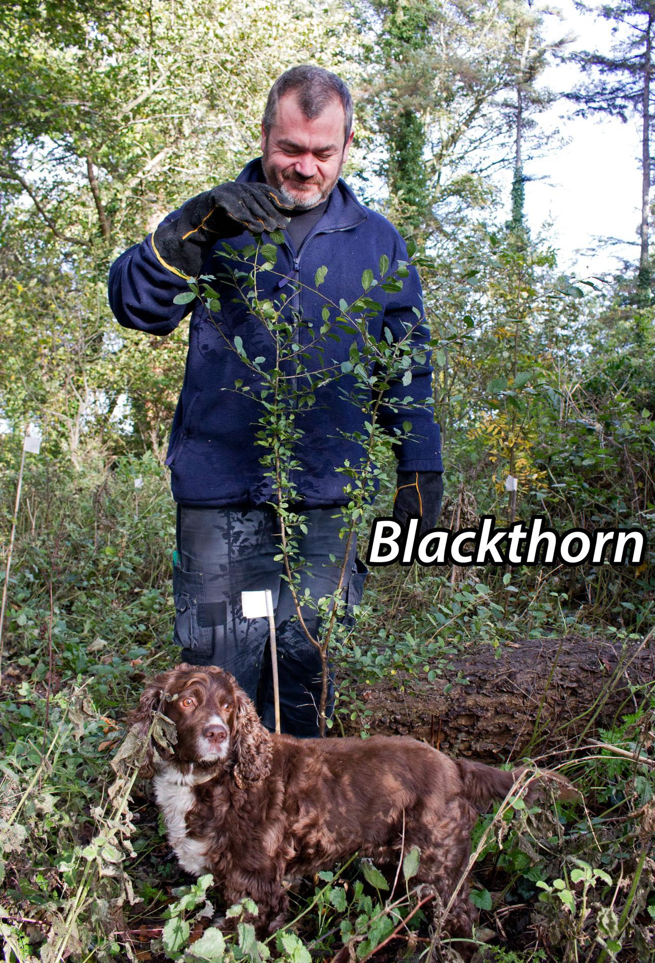 Blackthorn-1txt