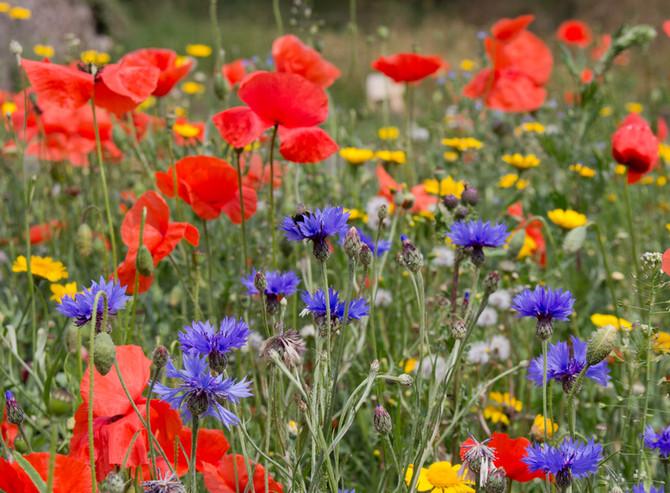 Remembrance & Biodiversity