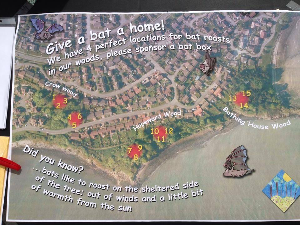 Bats need homes too