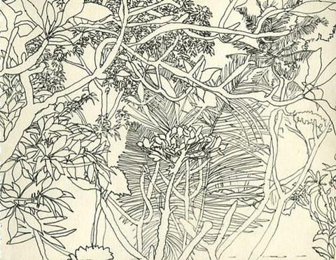 Bali Flora