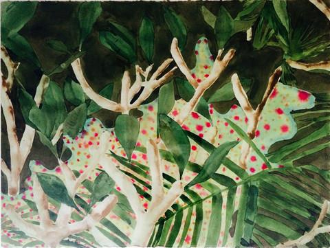 Untitled (Maui Series)